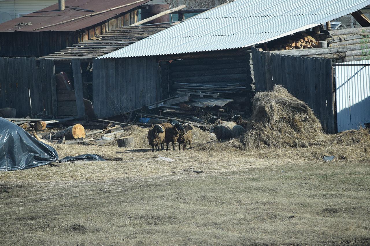 Ежегодные работы в поселке Колос