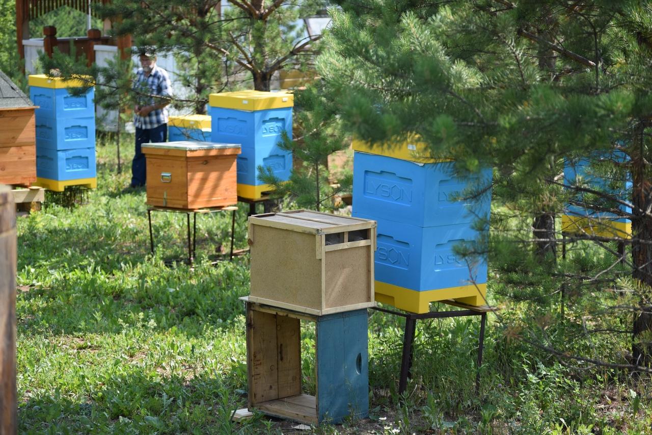 «Уральская пчелка» появилась в Кадниково