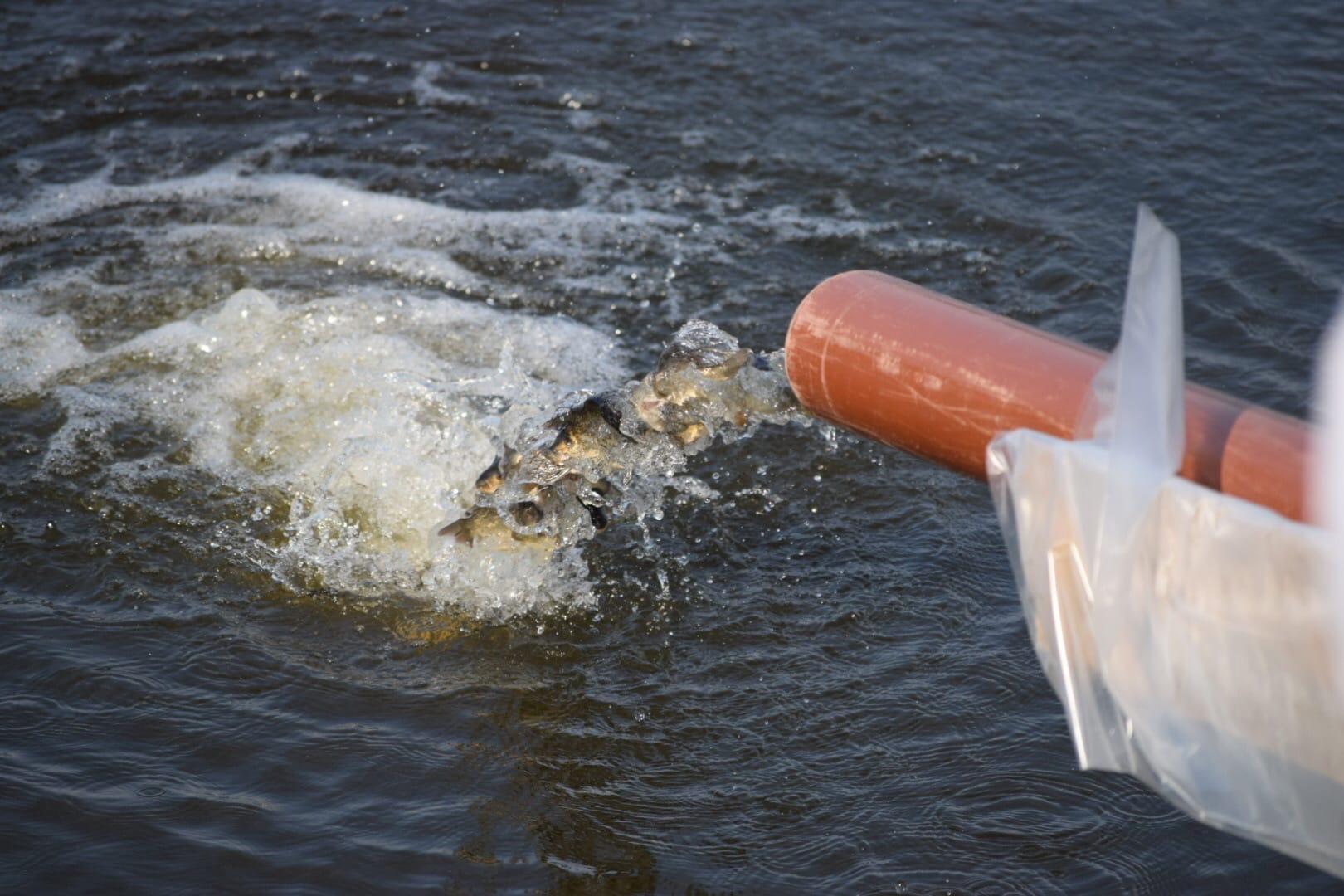 Зарыбление Верхнесысертского пруда